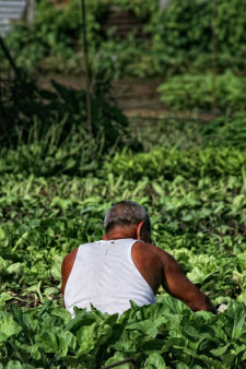 gardener-1.jpg
