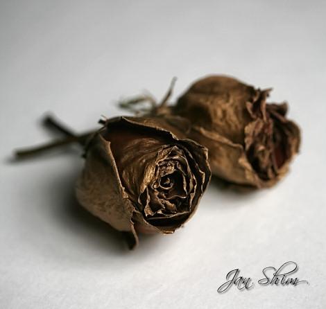 gold-rose.jpg