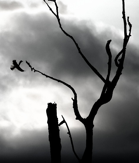 Hornbill Silhouette © Jan Shim Photography