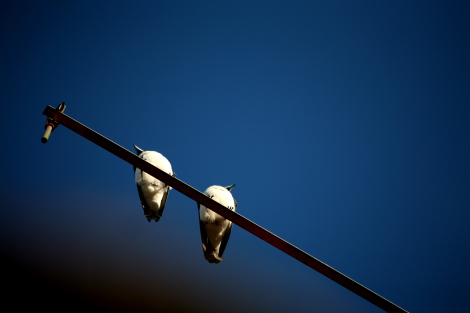 birdsonantenna