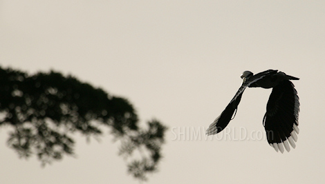 https://shimworld.files.wordpress.com/2008/11/hornbill-nov2008-05.jpg