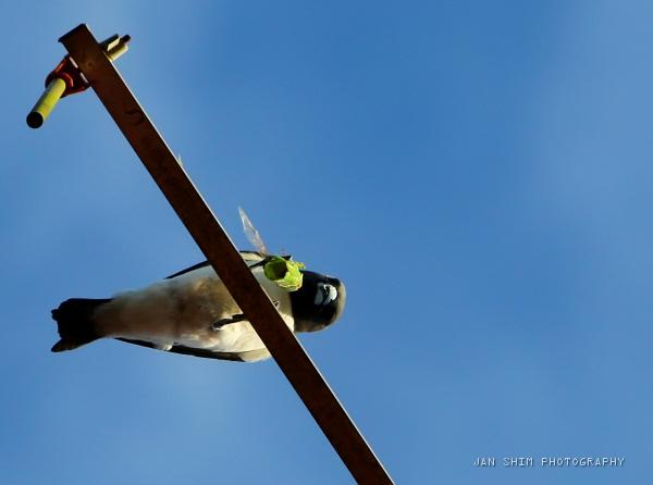 bird-cicada