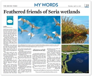 bruneitimes_egrets_wetlands_16042009