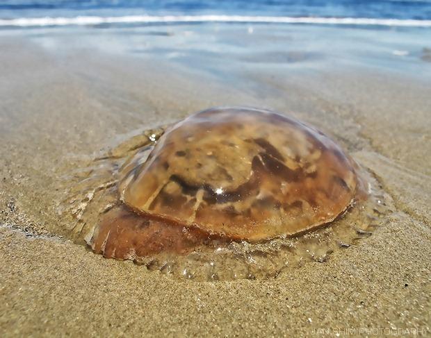 BeachCrabs-001