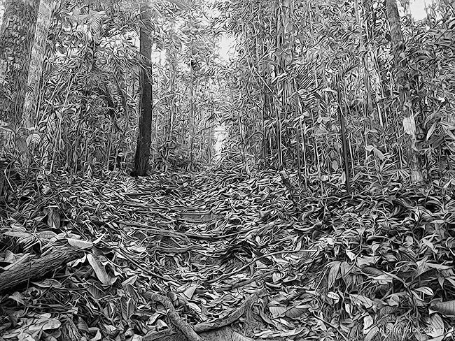 sungai-liang-forest-may-2013