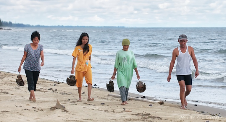 beach-family-catching-horseshoe-crabs